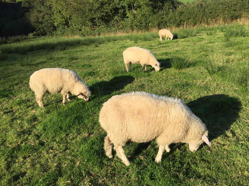 The Four Shearlings